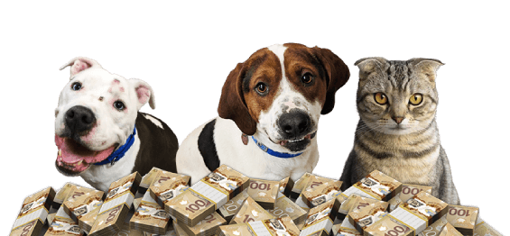Pets and the BC SPCA Lottery for Animals